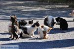 Poesjes en katten bij het Asklepion   Eiland Kos   Griekenland foto 1 - Foto van De Griekse Gids