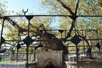 Hippocrates plataan | Kos stad | Griekenland foto 1 - Foto van De Griekse Gids