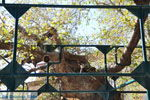 Hippocrates plataan   Kos stad   Griekenland foto 2 - Foto van De Griekse Gids