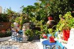 Kos stad (Kos-stad) | Eiland Kos | Griekenland foto 55 - Foto van De Griekse Gids